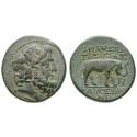 Seleukis und Pieria, Apameia, Bronze Jahr 243 = 70-69 v.Chr., ss-vz